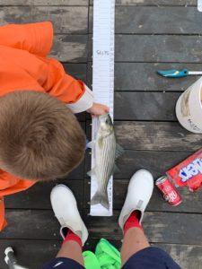 MA Striper fishing