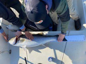 Jack Murphy fishing striper